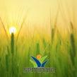 Tecnico della promozione di sistemi energetici e ambientali integrati – ORISTANO/SILÌ