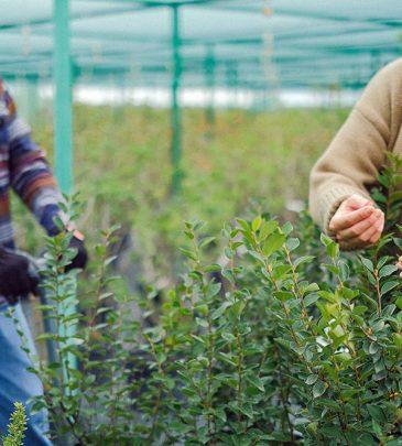 Addetto agli interventi agronomici_Garanzia Giovani_2A – ORISTANO/SILÌ
